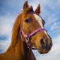 Veterinary college to open Long Island equine hospital