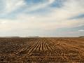 Farmland still