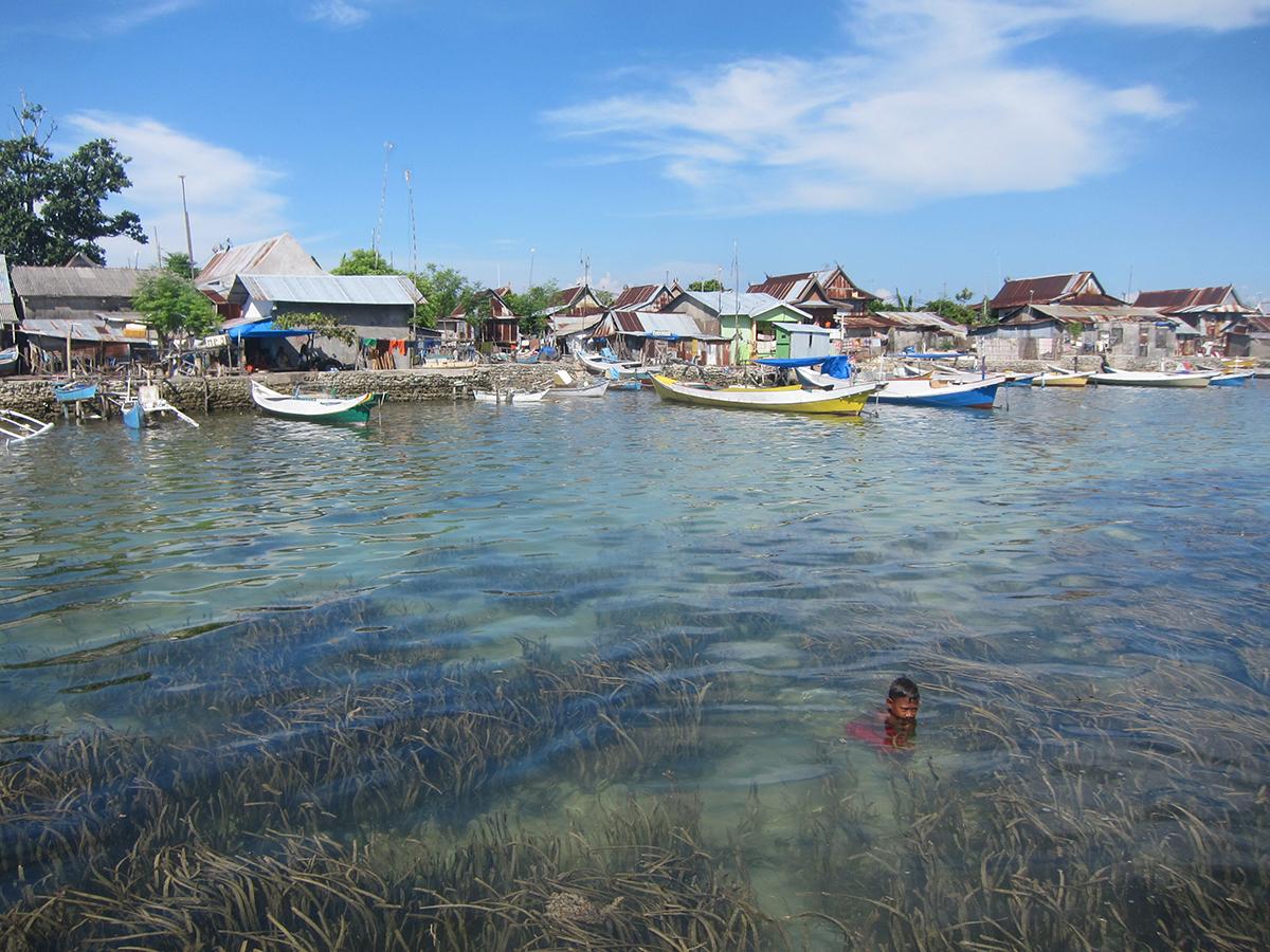 Underwater seagrass