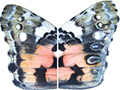 Butterfly spots