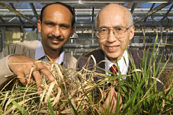 Ajay Garg, left, with 'normal' rice, and Ray Wu